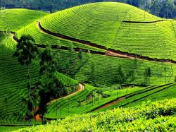 My Trip to Ooty – The Beautiful Hill Station in Tamil Nadu